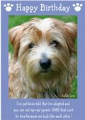 "Norfolk Terrier-Happy Birthday - ""I'm Adopted"" Theme"